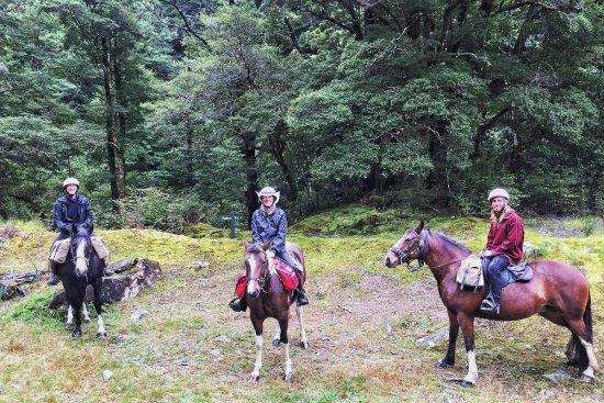 Мотуэка, Новая Зеландия: Beautiful horses for beginners and experienced riders