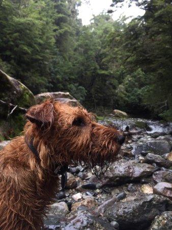 Мотуэка, Новая Зеландия: Picnic by the river