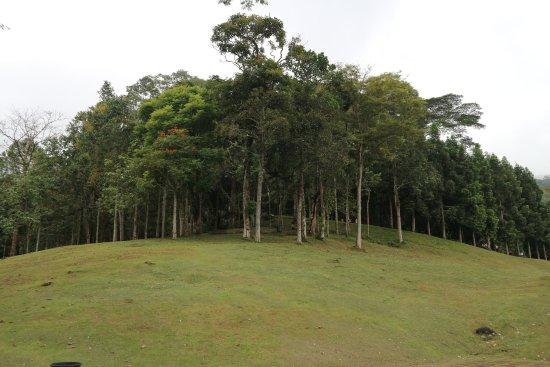 Tomohon, Indonesia: Trees around Bukit Doa
