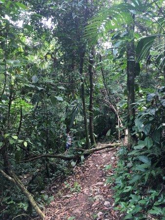 Belmopan, Belize: Jungle walk