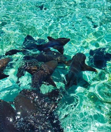 Caye Caulker, Belize : photo9.jpg