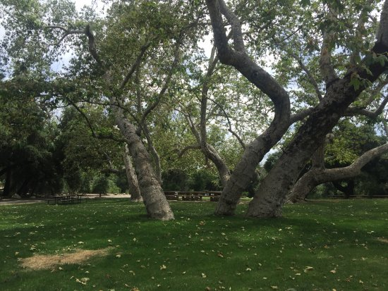 O'Neill Regional Park Camping: Large recreation areas with huge shade trees