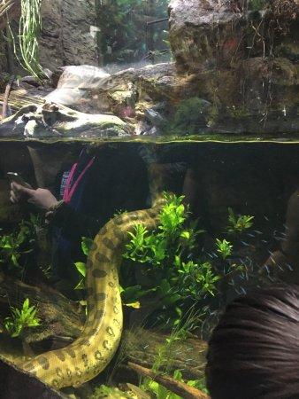 Dallas World Aquarium: photo3.jpg