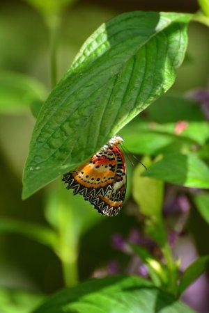 Butterfly Rainforest: photo0.jpg