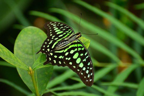 Butterfly Rainforest: photo3.jpg