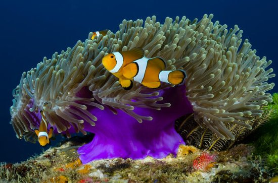 Scuba Diving Day Trip to Racha Yai from...