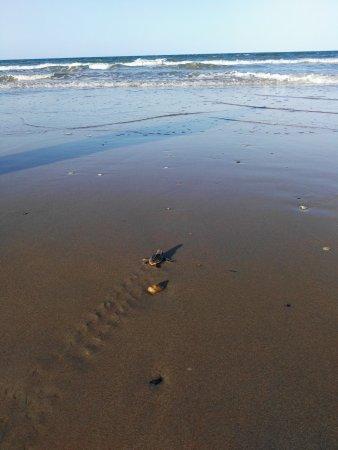 Bargara, Australia: Into the Ocean!