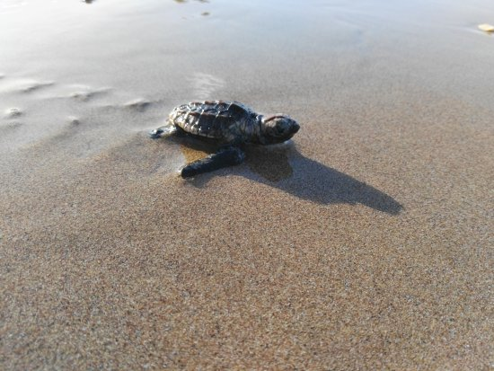 Mon Repos Turtle Centre