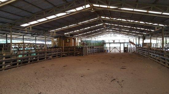 Hotel Hacienda Sueno Azul: Equestrian ring