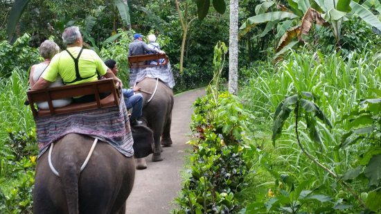 Elephant Safari Park & Lodge : On the trek