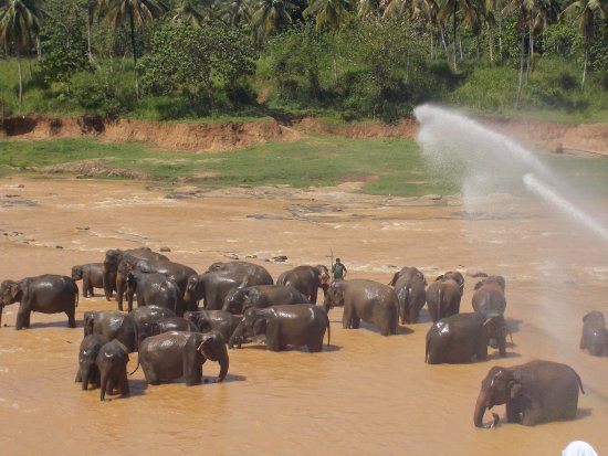 Pinnawala, Sri Lanka: water being splashed on them from a Hose