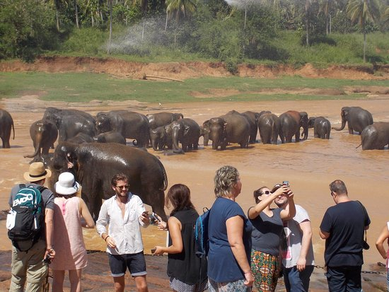 Pinnawala, Sri Lanka: more & more Tourists coming down