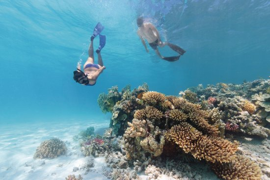 Bargara, Australia: Explore the Southern Great Barrier Reef from Lady Musgrave Island
