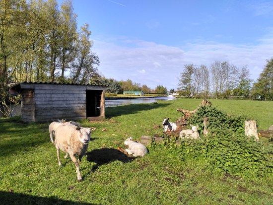 Reeuwijk, The Netherlands: IMG_20170422_092337_HDR_large.jpg