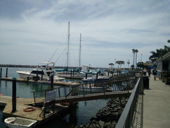 Dana Wharf Whale Watching & Sportfishing: IMG_20170424_123341_large.jpg