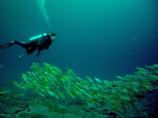 Borneo Dive Network
