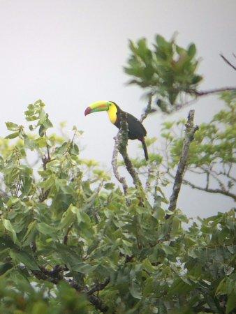 Santa Elena, Costa Rica: Toucan