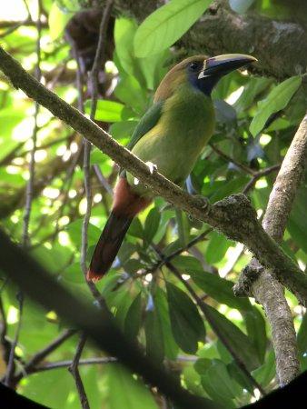 Santa Elena, Costa Rica: Toucanette