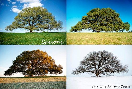 Chêne remarquable de Tombeboeuf aux 4 saisons