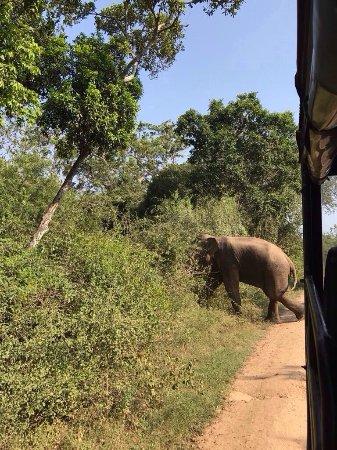 Tissamaharama, Sri Lanka: photo4.jpg
