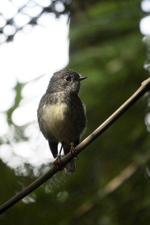 Habitat Tours: Forest Friends