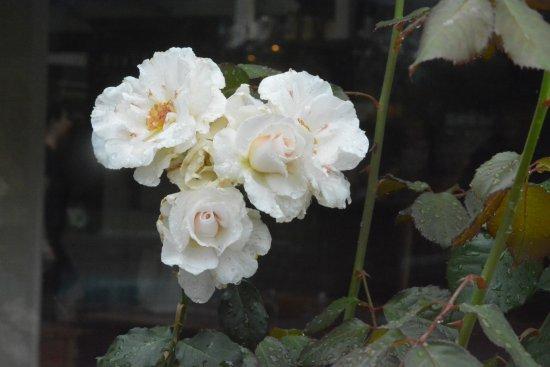 Matamata Picture