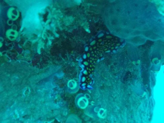Malay, Filippijnen: nudibranch