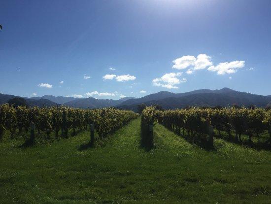 เบลนไฮม์, นิวซีแลนด์: photo0.jpg