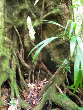 Roseau, Dominica: Ein paar Eindrücke von der wunderschönen Natur dort :-)