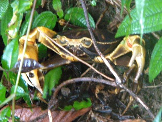 Roseau, Dominica: Ein paar Eindrücke von der wunderschönen Natur dort ;-)