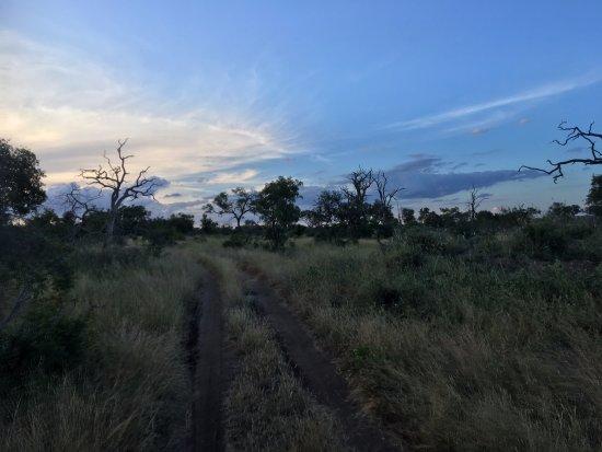 Notten's Bush Camp: Skumring fra eftermiddagens game drive
