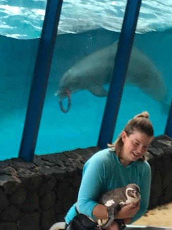 Sea Life Park Hawaii: ハワイ滞在中に絶対行こうと決めて行きました 体験は何もしなかったのですが イルカのショーがスタッフの方もフレンドリーなのと 観客もノリがとても良くて 一体感が有ってとても楽しかったです 魚にレ