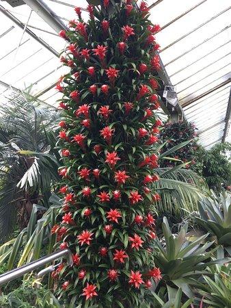 Kew, UK: photo4.jpg