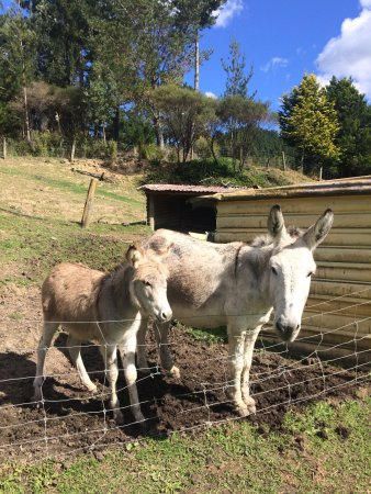 Whitianga, Nieuw-Zeeland: Whiti Farm Park