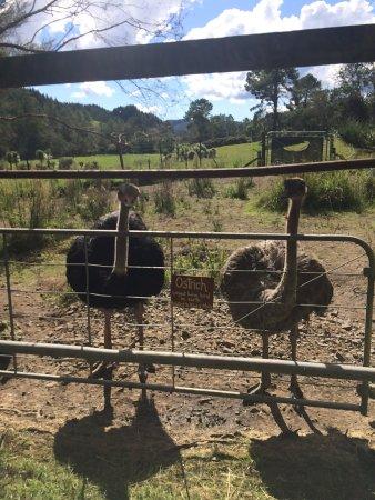 Whitianga, Neuseeland: Whiti Farm Park
