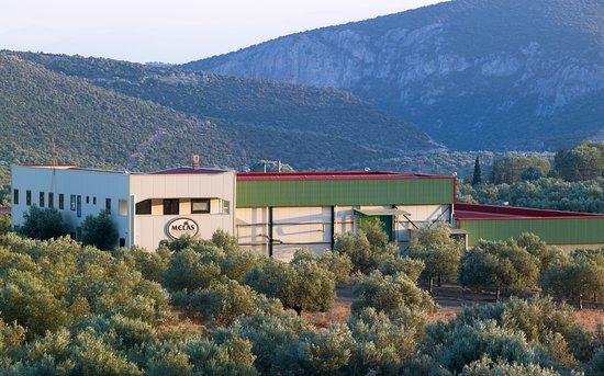 Melas - Epidavrus Olive Oil Domain