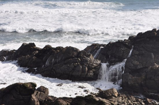 Westport, Nuova Zelanda: Seals playing in the pools as waves wash over the rocks.