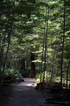 Manapouri Photo