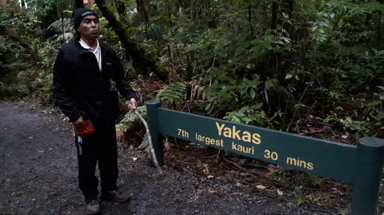 Waipoua Forest, Yeni Zelanda: Billy Boy, our guide