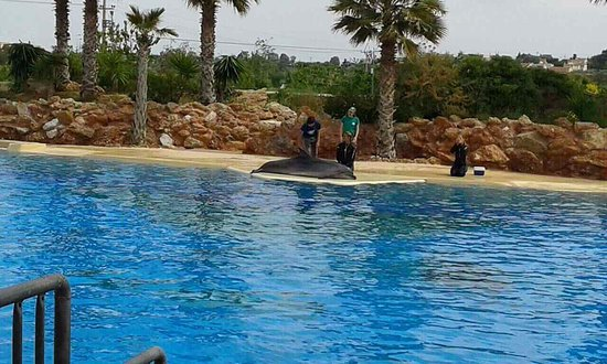 Spata, اليونان: Σόου δελφινιών