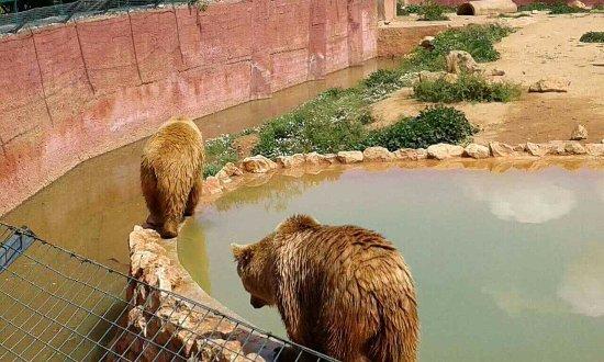 Spata, اليونان: Αρκούδες