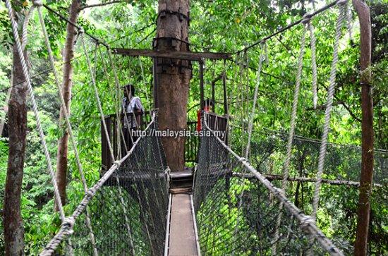 Taman Negara National Park: Taman Negara Canopy Walk (Photo by Malaysia Asia)