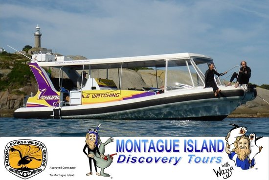 Lighthouse Charters Narooma & Montague Island Discovery Tours