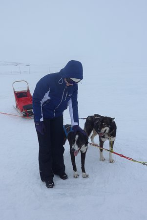 Geilo, Norway: two of the dog team with sledge
