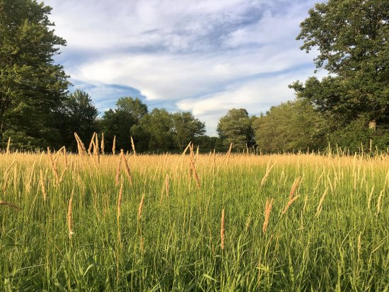 Williamston, MI: Grassland hiking trails