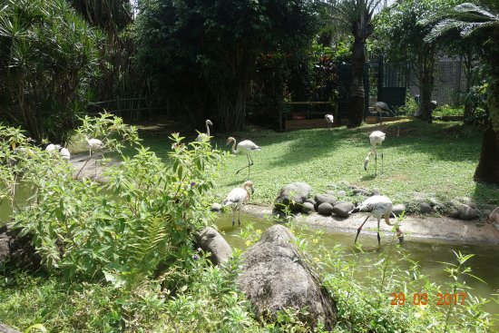 les flamants roses picture of jardin botanique de deshaies deshaies tripadvisor. Black Bedroom Furniture Sets. Home Design Ideas