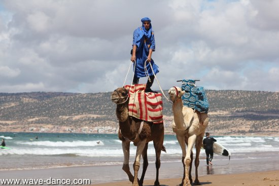 Tamraght, Marrocos: Surf a Camel with us in Morocco