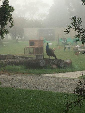 Ventnor, Австралия: Ripples n Tonic Alvina Farmstay