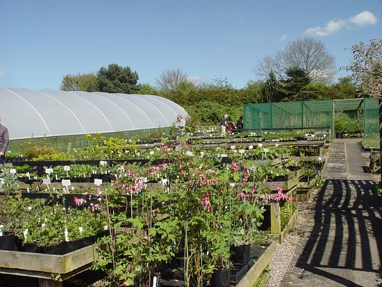 Dutton, UK: Lots of plants for sale!