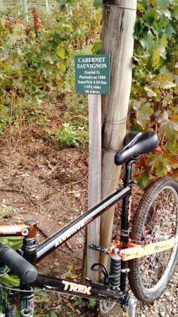 La Posada de Bodega Vistalba: En bici por la viña